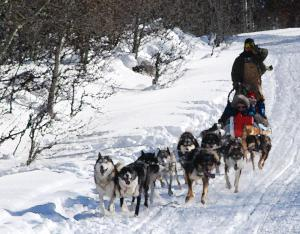 A Dog Sled Pulled By A Team Of Ididirods In Below Zero Temperatures.